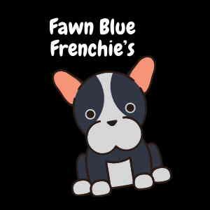 fawn blue french bulldog