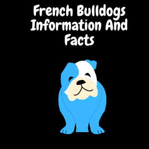 French Bulldogs Information And Facts